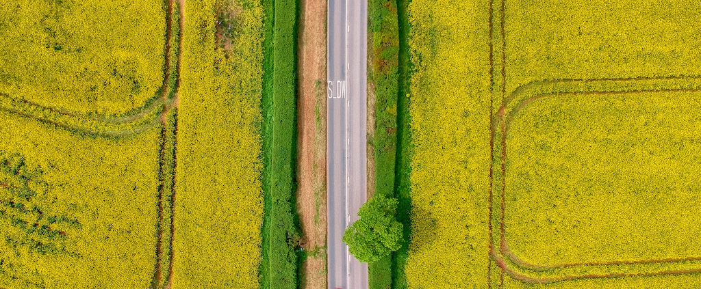 Aerial view of yellow canola fields with a road in the middle and single red car on the road