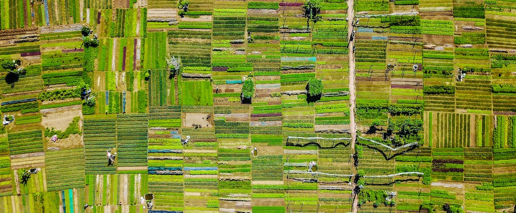 An aerial view of green agricultural fields of different shades of green