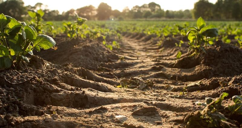 A dirt track going through a green field