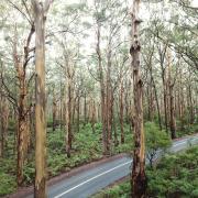 Photo of road passing through native vegetation